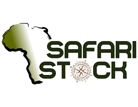 Safari Stock